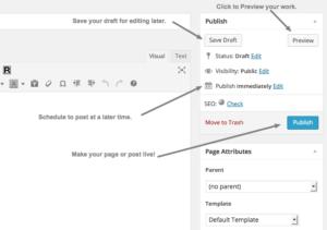 Publishing Option in WordPress